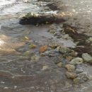 Середина августа в Крыму: в сети показали грустные фото пляжа в Евпатории