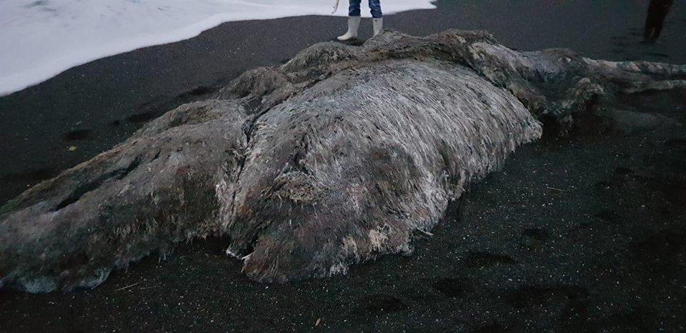 К берегу России прибило огромного морского монстра (фото)