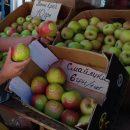 В Украине начали выращивать яблоки со смайликами (фотофакт)