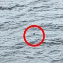 У Шотландії знову побачили Лох-Несське чудовисько  (фото)