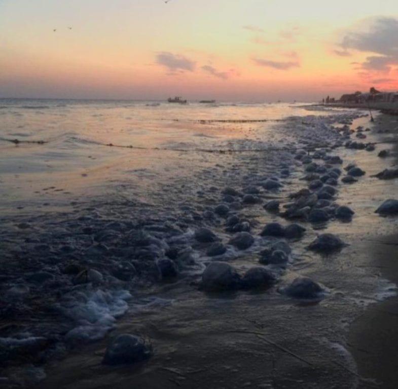 Море: медузы захватили черноморские пляжи (фото)