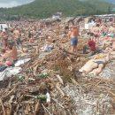 Как после кораблекрушения: в Краснодарском крае отдыхающие загорают посреди мусора, водорослей и палок