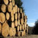 ГФС разоблачила одну из схем контрабанды леса-кругляка в Румынию
