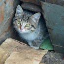 В Киеве появился садист-живодер, который охотится на котов