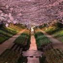 Умора: японский сад потерял сотни тысяч из-за стеснительного билетера