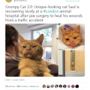 В Сети отыскали самого надменного в мире кота