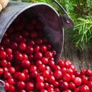 Кардиологи назвали одну из самых полезных ягод для сердца
