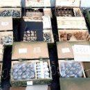 Из Донбасса хотели вывезти на продажу пять тонн боеприпасов (видео)