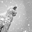 Украину завалит снегом: Каким регионам достанется сильнее