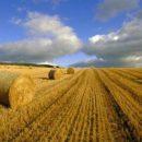 Депутати продовжили мораторій на продаж землі до 2020 року
