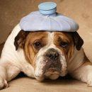 5 наукових рецептів боротьби з похміллям