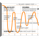 Фаза сна, последовательность и длительность