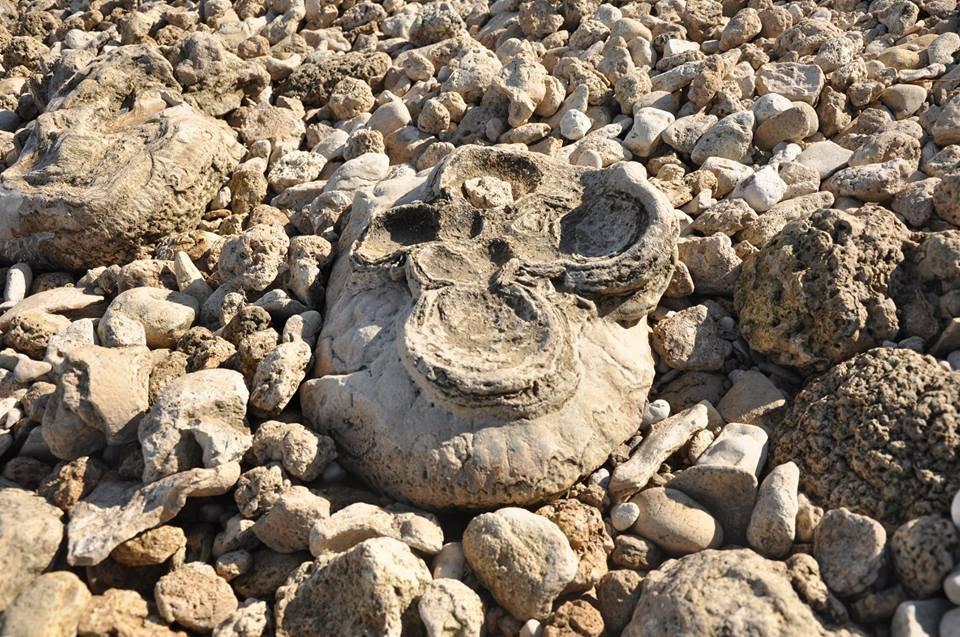Специалисты ломают головы: на берегу Днепра выявлены странные камни (фотофакт)
