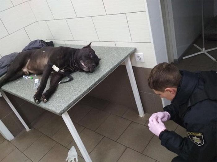 В Киеве полицейский застрелил бойцовскую собаку, бросавшуюся на людей в супермаркете (фото)
