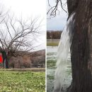 В Черногории дерево внезапно превратилось в фонтан (видео)