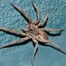 Жители Запорожской области страдают от нашествия крупных ядовитых пауков