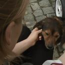 В Польше пес убежал от хозяев и сел на поезд, идущий в город его подруги