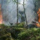 Названа причина природных пожаров в Сибири