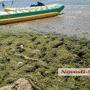 На популярному українському курорті позеленів пляж: показали фото