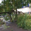 Ураган повалил деревья и оборвал электропровода во Львове