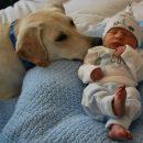 «Ты кто?» Собака впервые встретила ребенка из роддома