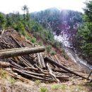 Зеленский подписал закон об охране от вырубки елово-буковых лесов в Карпатах