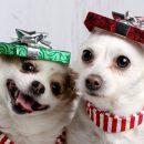 Дівчина показала новорічне фото своїх песиків, і тепер над цим сміється весь інтернет