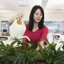 Врачи рассказали, какие домашние растения вызывают аллергию
