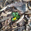Фото дня: цветок распустился зимой в одном из парков Харькова