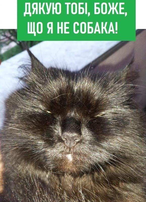 """""""Його треба продати"""": українці у мережі висміяли нардепа від """"Слуги народу"""" за """"собачу"""" пораду"""