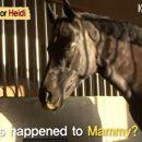 Соцсети растрогала лошадь, которая пыталась воскресить жеребенка