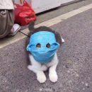 Сеть рассмешил кот в защитной маске от коронавируса
