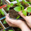 Лучший выбор семян для отменного урожая
