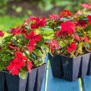 Цветы однолетки оптом и в розницу на сайте Бест Агро
